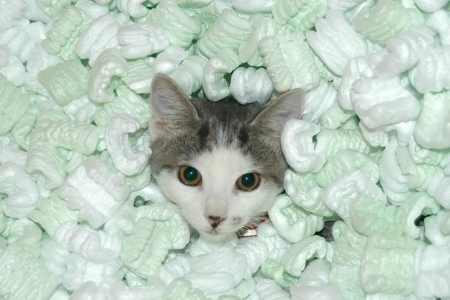packing peanuts cat