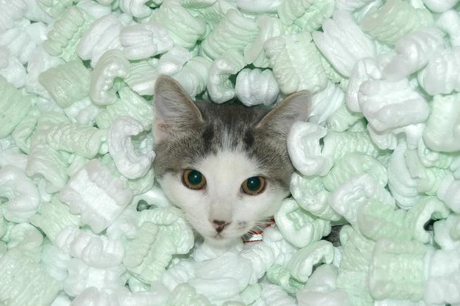 packing peanuts cat