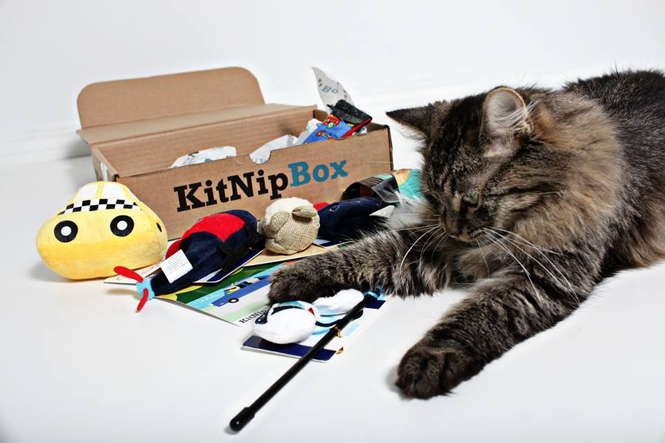 best subscription boxes: kitnipbox
