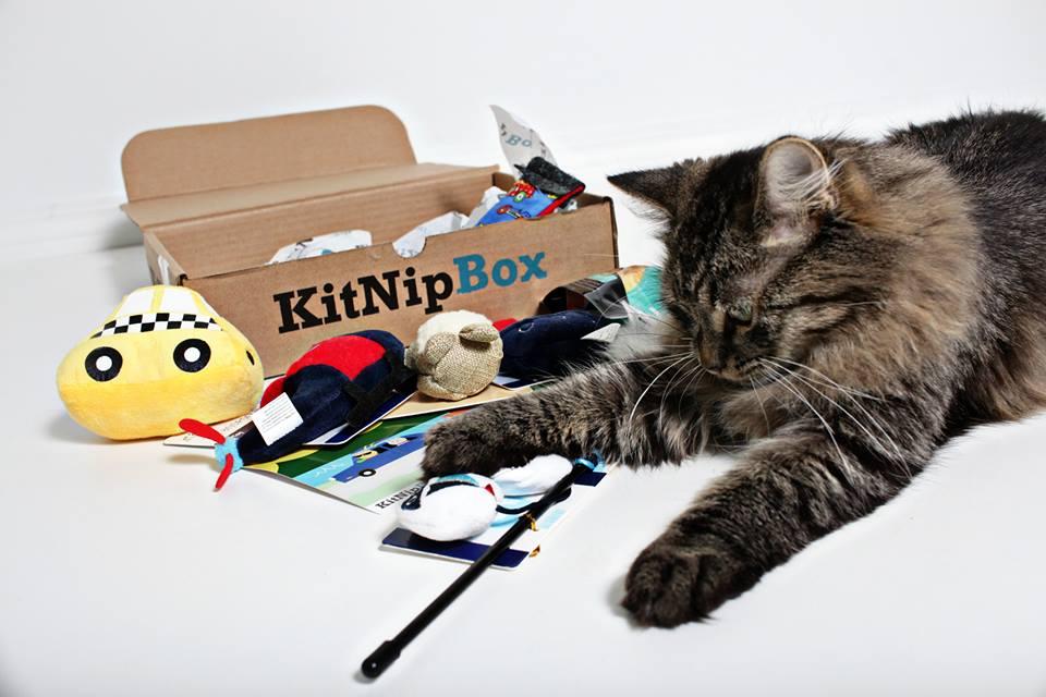 best subscription boxes: kitnipbox
